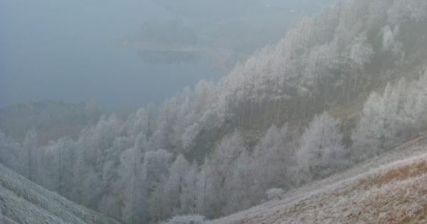 Snow covered forrest above Derwent Water