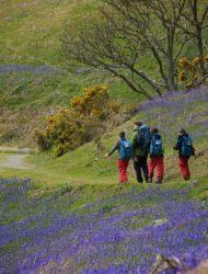 A Year six John Muir Award group wandering through the bluebell woods